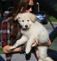 El perro de Miley Cyrus