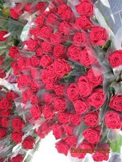 ESCLAT DE ROSES DE SANT JORDI