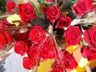 SANT JORDI 2012 I POM DE ROSES