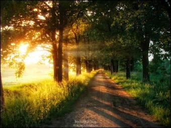 tu camino (LLLLLLLLLL)