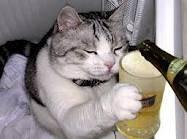 gato tomando  cerveza
