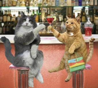 gatos  tomado vino