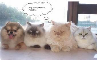 gatos espia