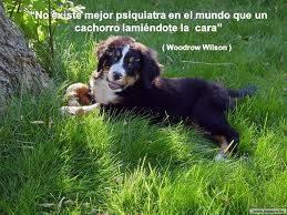 No existe mejor psiquiatra en el mundo que un cachorro lamiendote la cara