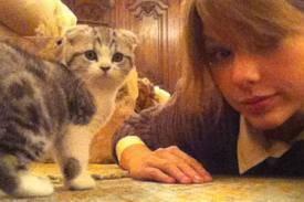 El gatito de Taylor Swift �Creo que vi un moxo gatito!