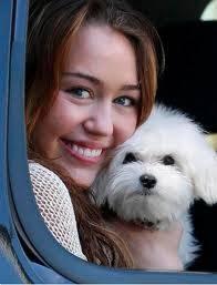 El perro de Miley Cyrus �es hermosaaa!