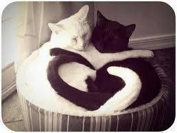 gatos dormidos
