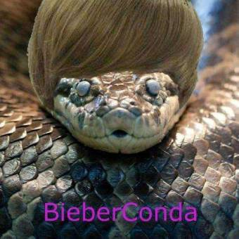 bieberconda