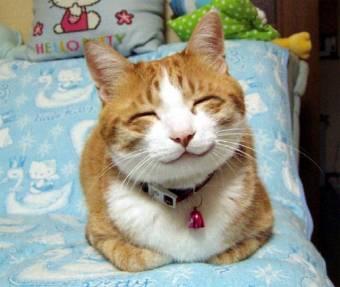 y gato feliz