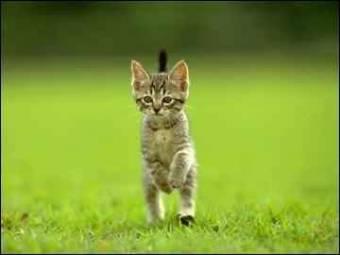 gatito corriendo