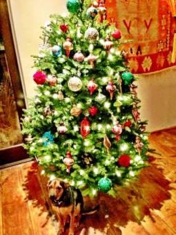 esta foto tambien me la enseño MileyFan@ es su arbol de navidad.