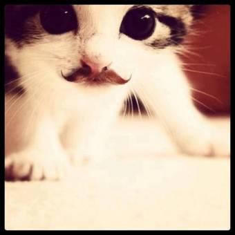 gato con mostacho