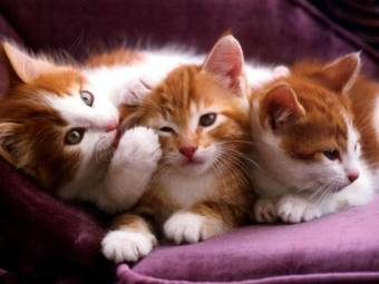 Gatos (feos)