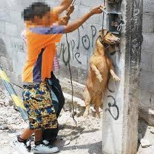 si al maltrato animal
