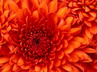por tan bella ke pareces una flor