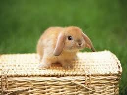 Conejito bebe
