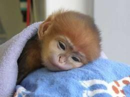 Monito bebe