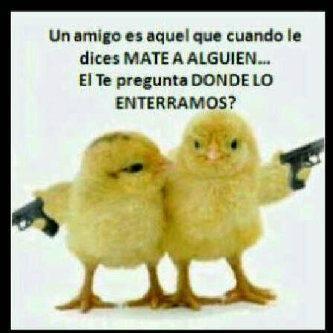 Pollitos!!!
