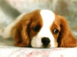 que lindo este perrito