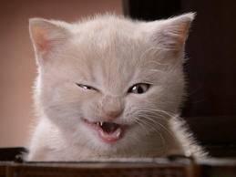 que intensiones tendra este gato grgrgrgr
