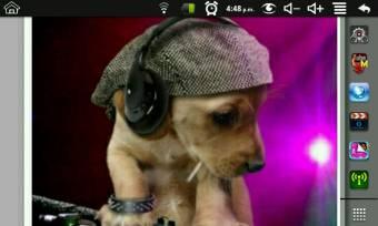 un perrito rapero