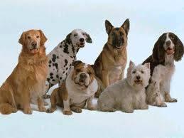 Los Perros!!