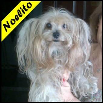 Noelito