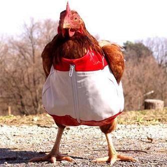 la gallina anacleta