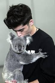 Zaym cargando un koala