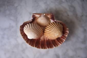 Conchas Rizadas