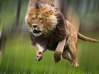 leon tonto