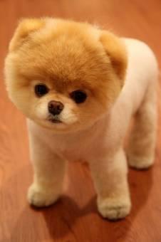 este es mi perro booop